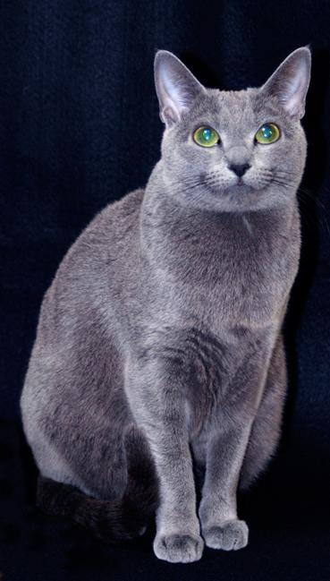 貓足6.jpg